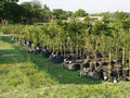 Watercombe Farm indigenous tree nursery